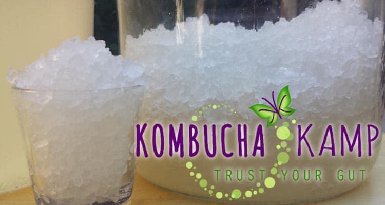 Water Kefir Recipe and Tips from Kombucha Kamp