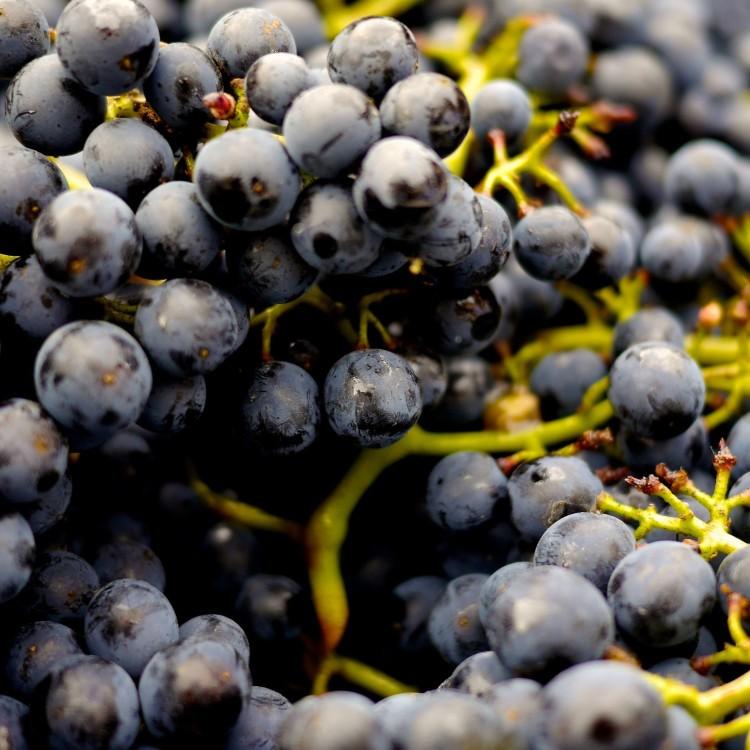 Balsamic vinaigrette keto friendly grapes