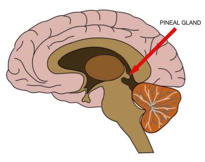 Pineal gland melatonin keto